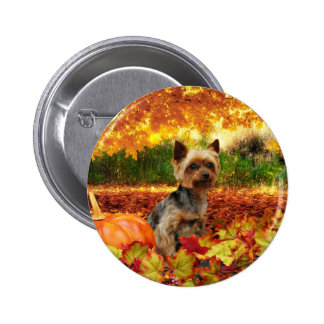 Fall Thanksgiving - Tucker - Yorkie 2 Inch Round Button