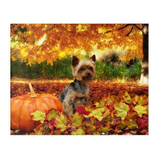 Fall Thanksgiving - Tucker - Yorkie Acrylic Print