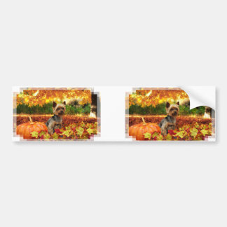 Fall Thanksgiving - Tucker - Yorkie Bumper Sticker