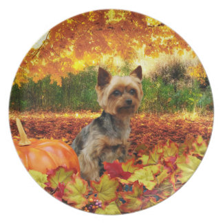 Fall Thanksgiving - Tucker - Yorkie Plates