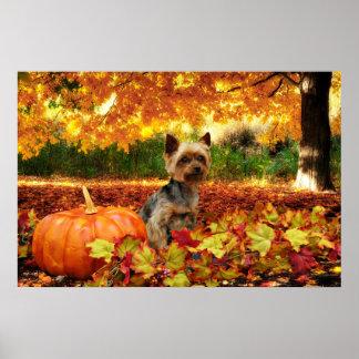 Fall Thanksgiving - Tucker - Yorkie Poster