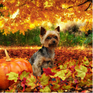 Fall Thanksgiving - Tucker - Yorkie Standing Photo Sculpture