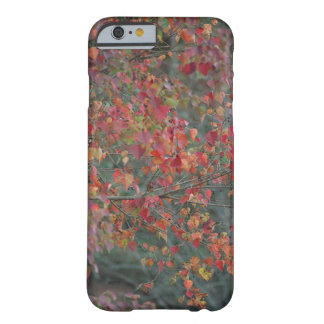 Fall themed iPhone case