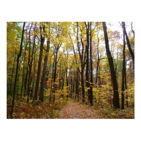 Fall Trail and Golden Leaves at Laurel Hill Park Postcard