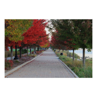 Fall Tree Line Poster