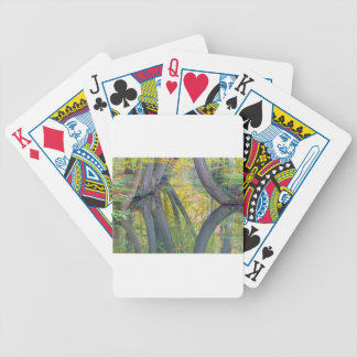 Fall tree trunks with reflection in dutch forest bicycle playing cards