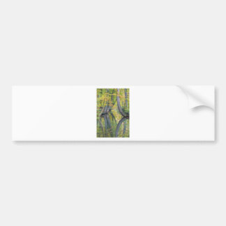Fall tree trunks with reflection in forest water bumper sticker