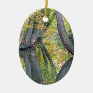 Fall tree trunks with reflection in forest water ceramic ornament