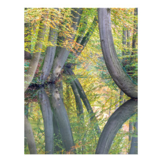 Fall tree trunks with reflection in forest water letterhead