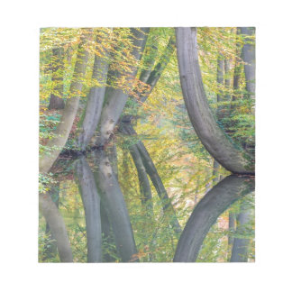 Fall tree trunks with reflection in forest water notepad