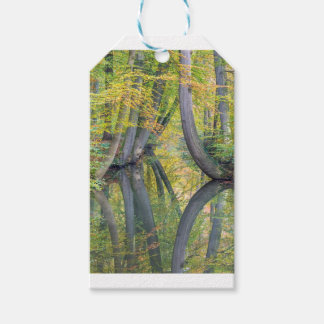 Fall tree trunks with reflection in forest water pack of gift tags