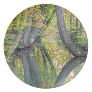 Fall tree trunks with reflection in forest water plate