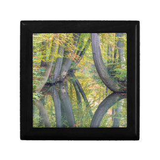 Fall tree trunks with reflection in forest water trinket boxes