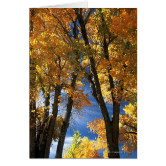 Fall Trees Card