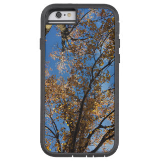 Fall Trees Phone Case