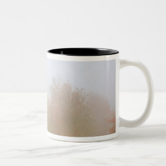Fall trees shrouded in mist Two-Tone coffee mug