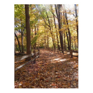 Fall walk in the park and changing colors postcard
