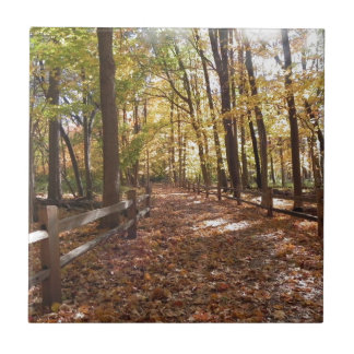 Fall walk in the park and changing colors tile