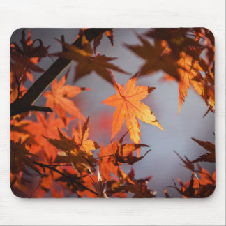 Fall Wonderland of Autumn Colour Mouse Pad