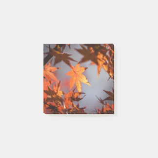 Fall Wonderland of Autumn Colour Post-it Notes
