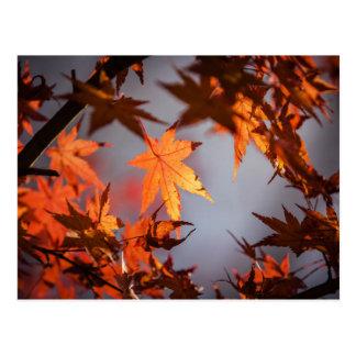 Fall Wonderland of Autumn Colour Postcard