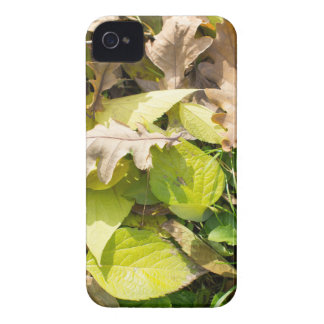 Fallen autumn leaves on green grass lawn Case-Mate iPhone 4 cases