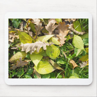Fallen autumn leaves on green grass lawn mouse pad