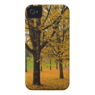 Fallen Fall Color Leaves on Parks Ground iPhone 4 Case-Mate Case