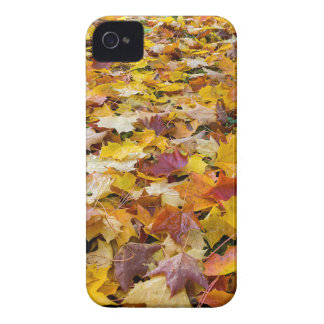Fallen Fall Color Leaves on Parks Ground iPhone 4 Cover