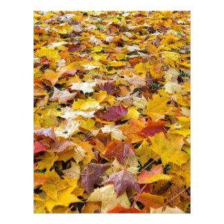 Fallen Fall Color Leaves on Parks Ground Letterhead