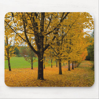 Fallen Fall Color Leaves on Parks Ground Mouse Pad