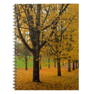 Fallen Fall Color Leaves on Parks Ground Notebook