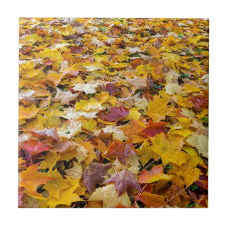 Fallen Fall Color Leaves on Parks Ground Tile