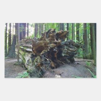 Fallen Giant Redwood Sequoia Tree
