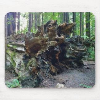 Fallen Giant Redwood Sequoia Tree Mouse Pad