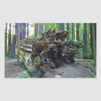 Fallen Giant Redwood Sequoia Tree Sticker