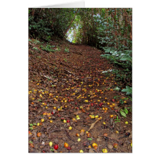 Fallen Red and Yellow Guavas on the Trail Card