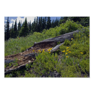 Fallen Tree and Mountain Wildflowers Poster