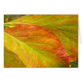 Falling Leaves Note Card