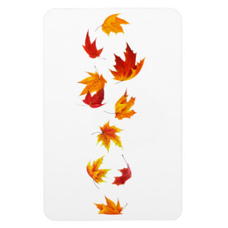 Falling maple leaves magnet