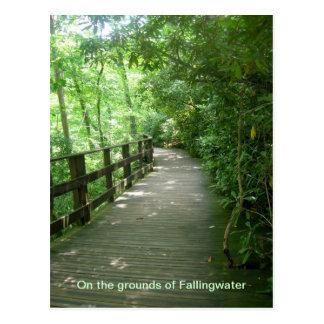 Fallingwater Postcard