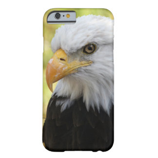 Falln Bald Eagle Liberty Barely There iPhone 6 Case