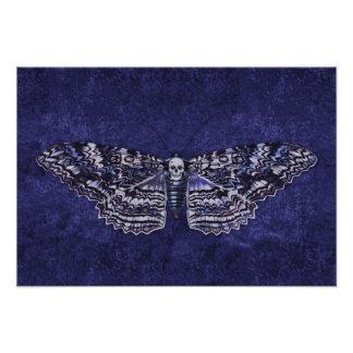 Falln Deathshead Moth Photograph