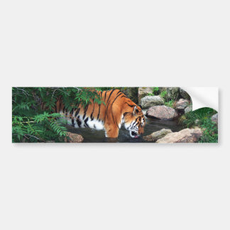 Falln Drinking Tiger Bumper Sticker