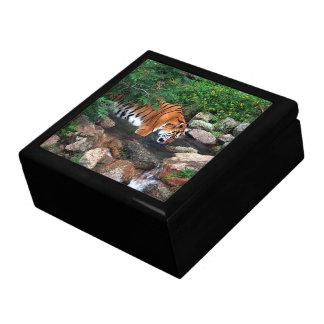Falln Drinking Tiger Gift Box