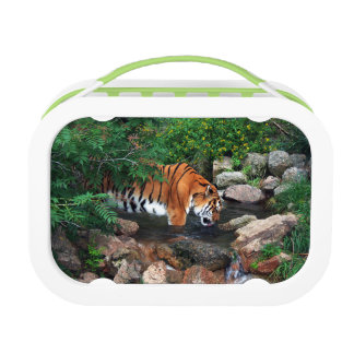 Falln Drinking Tiger Lunch Boxes