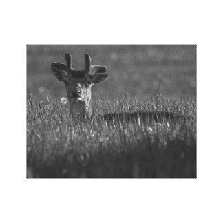 Fallow Deer 2 BW Canvas Print