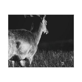 Fallow Deer 3 BW Canvas Print