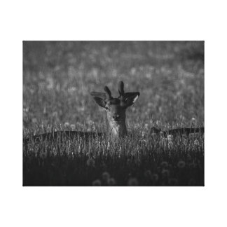 Fallow Deer 4 BW Canvas Print