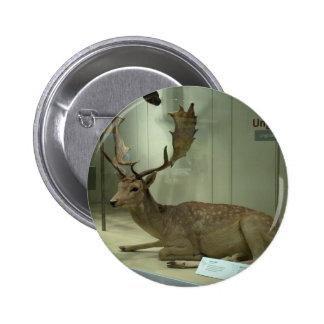 Fallow deer (Dama dama) Pinback Button
